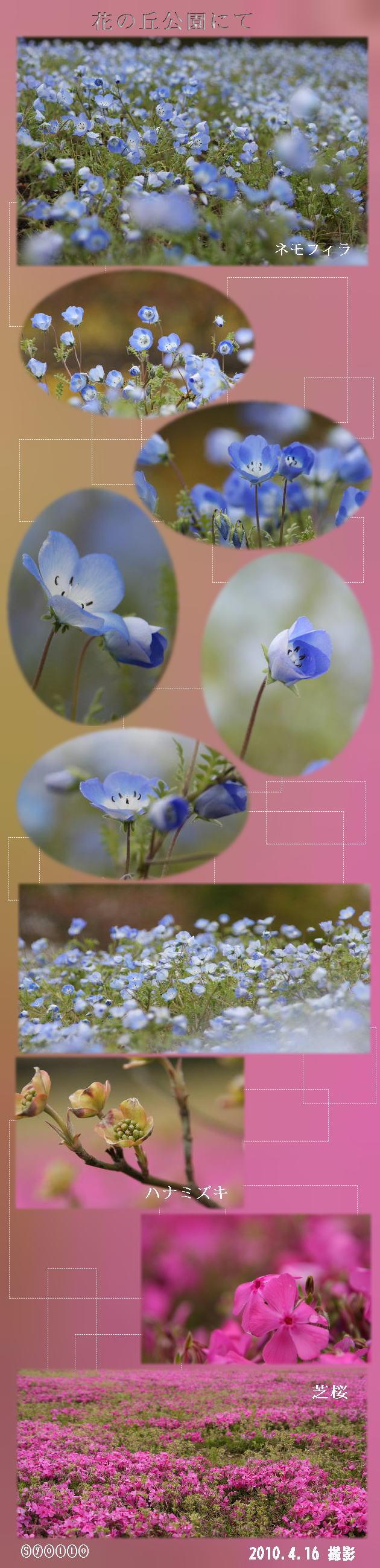 f0164592_921860.jpg