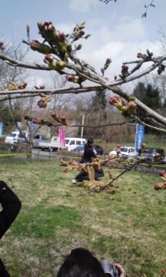 桜の蕾の下で演武_f0168392_2144232.jpg