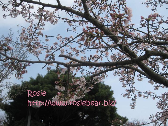 b0032098_8351778.jpg
