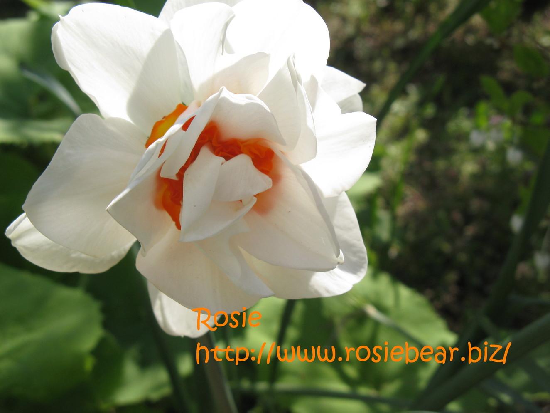 b0032098_84418.jpg