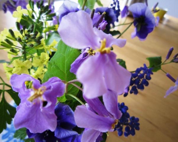 菜の花とトシとチビ_c0125702_22191172.jpg