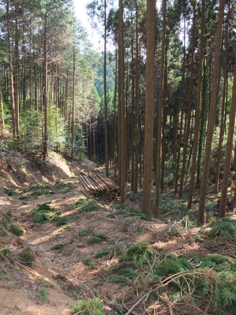 山作りは森作り。森作りは木作り_d0015306_9364591.jpg