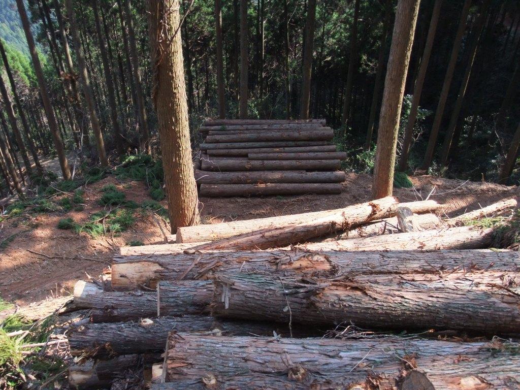 山作りは森作り。森作りは木作り_d0015306_9455956.jpg