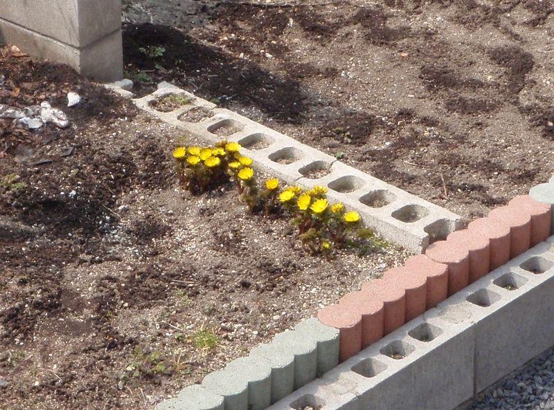 春の色_c0025115_20114223.jpg