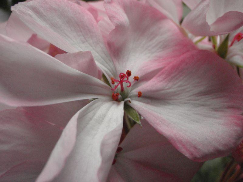 春の色_c0025115_20232433.jpg
