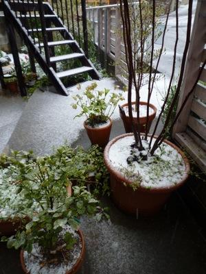 雪!!_c0004024_13443640.jpg