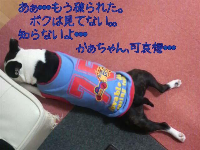 f0190426_9302985.jpg