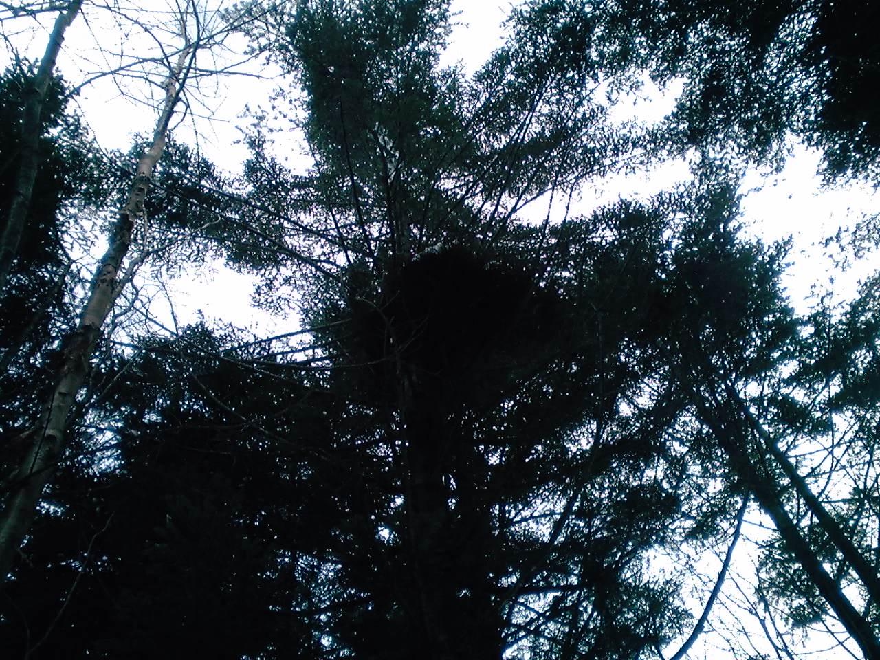 鳥の巣_e0155231_1955624.jpg