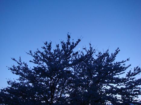 月と桜_a0014840_22552255.jpg