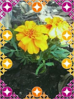 EarthDayお土産_c0153150_18551725.jpg