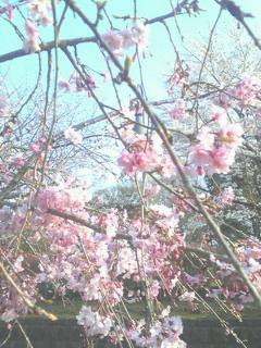 古河総合公園_c0153150_21554090.jpg
