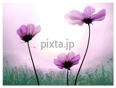 b0161652_17551414.jpg