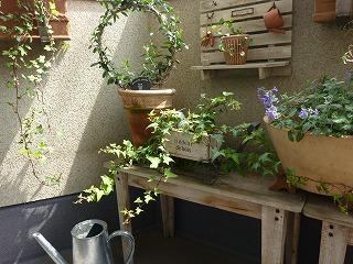 veranda  gardening_a0165160_20365825.jpg
