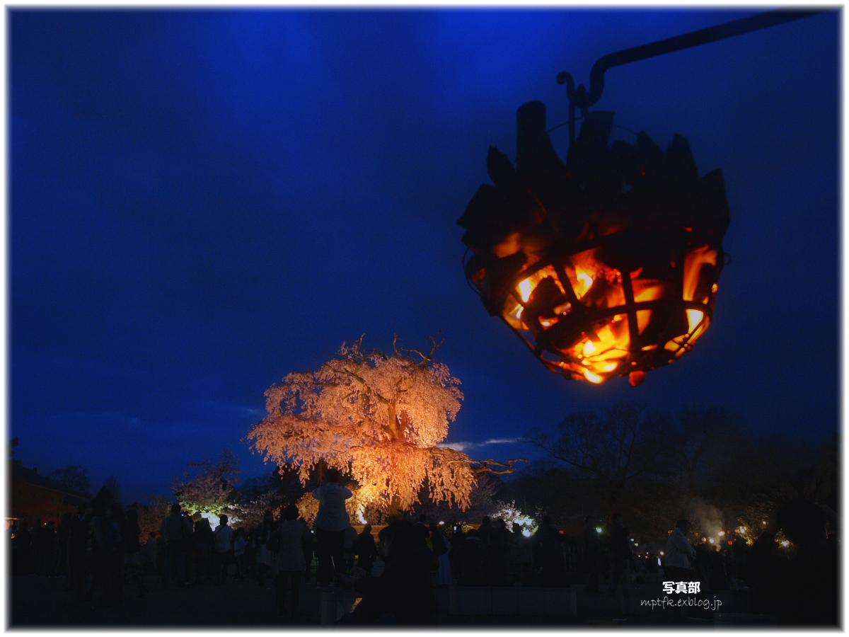 京都 円山公園 夜桜_f0021869_23393171.jpg