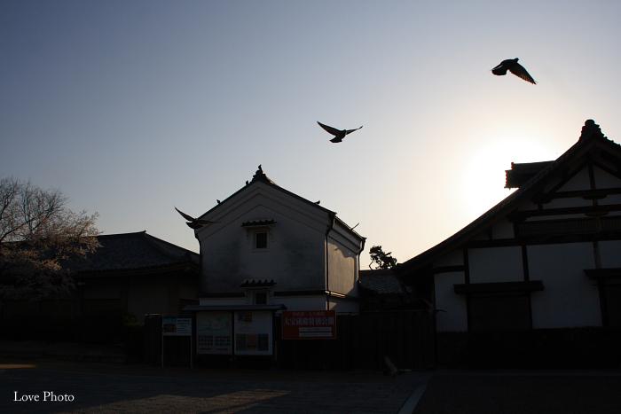 薬師寺 薄墨桜と鳥_a0116472_046463.jpg