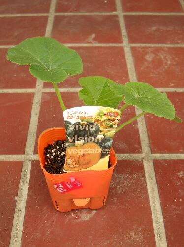栗坊、フリーダム、飛騨カボチャ、カンピョウ、今年育てる瓜科の野菜 _f0018078_1843522.jpg