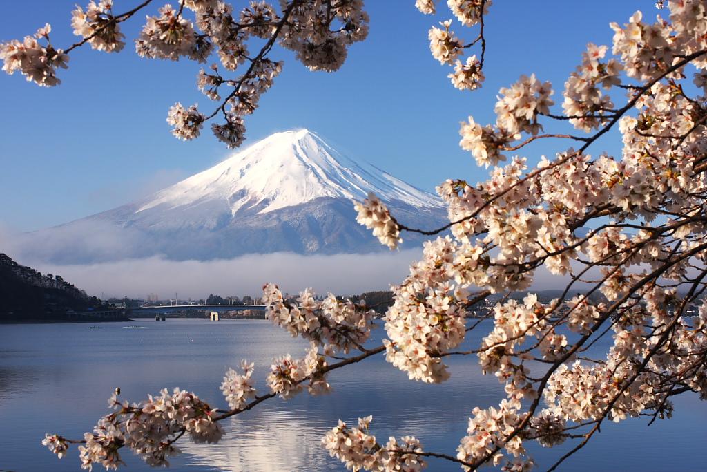 富士と桜_b0116600_23591488.jpg