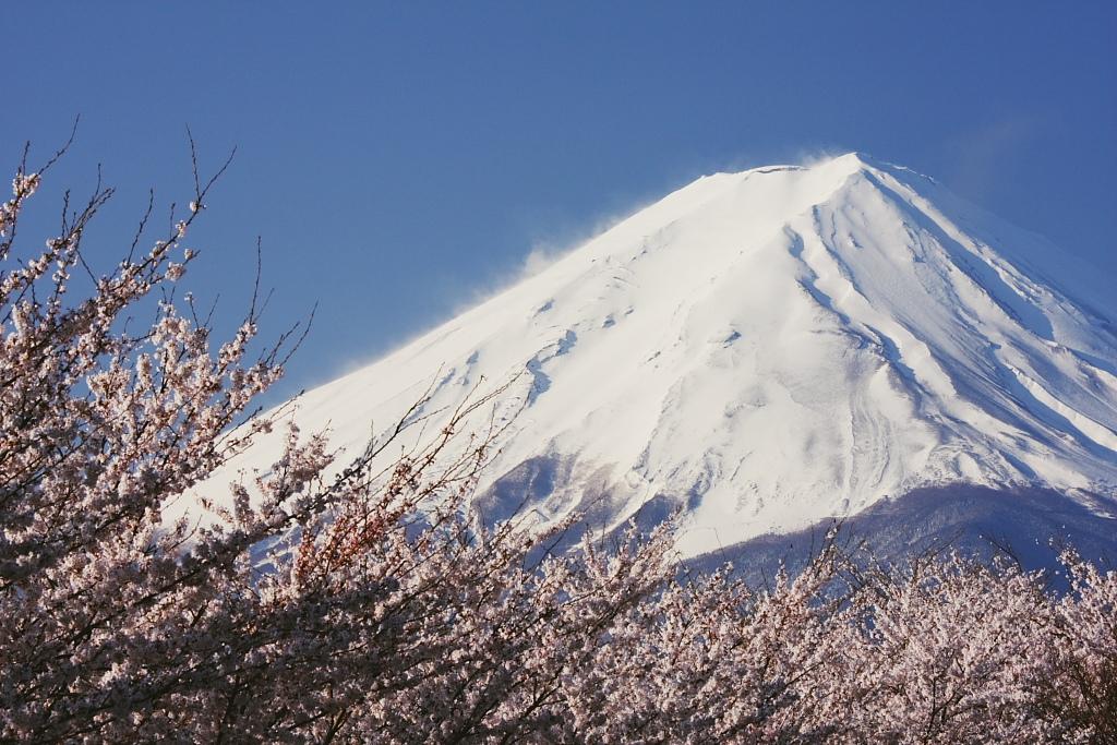 富士と桜_b0116600_23594012.jpg