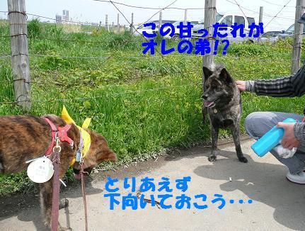 f0121712_855277.jpg