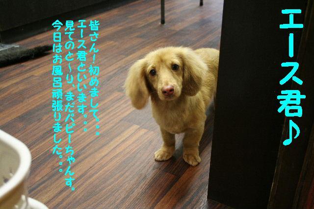 b0130018_18395216.jpg