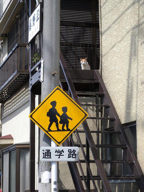 階段に猫_e0089232_1285931.jpg