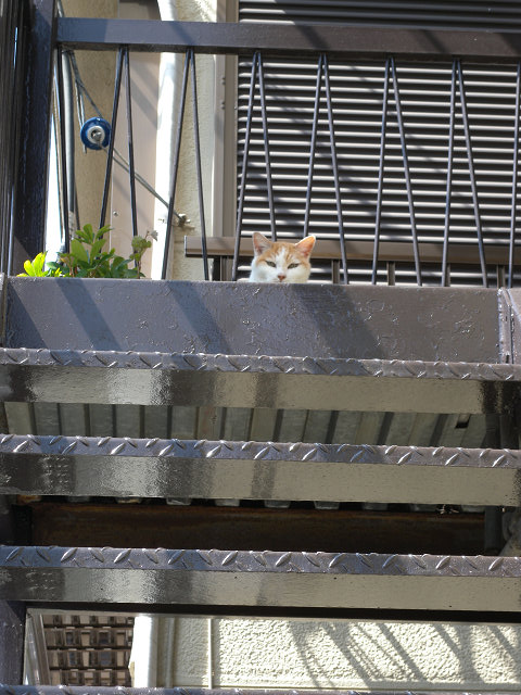 階段に猫_e0089232_129678.jpg