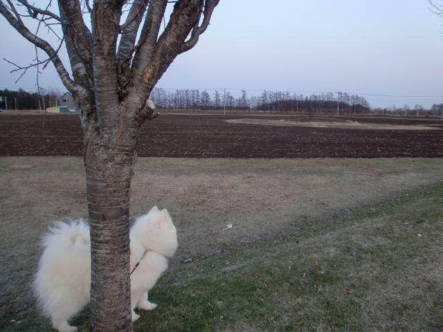 春なのにまた雪〜_a0057237_20573357.jpg