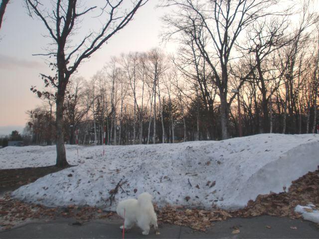 春なのにまた雪〜_a0057237_20584172.jpg