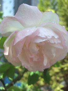 春のかわいコたち。_c0048042_1315122.jpg