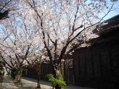 倉敷アイビースクェア ~西国桜旅②_b0050651_9533532.jpg