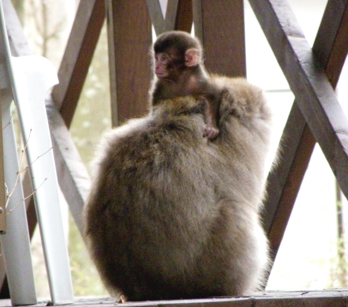 早い出産の始まり  2010年4月6日〜_e0005362_2223821.jpg