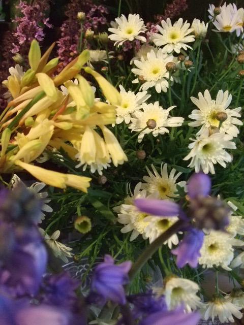 オークリーフ(香りの良いバラの花を・・・)_f0049672_13594592.jpg
