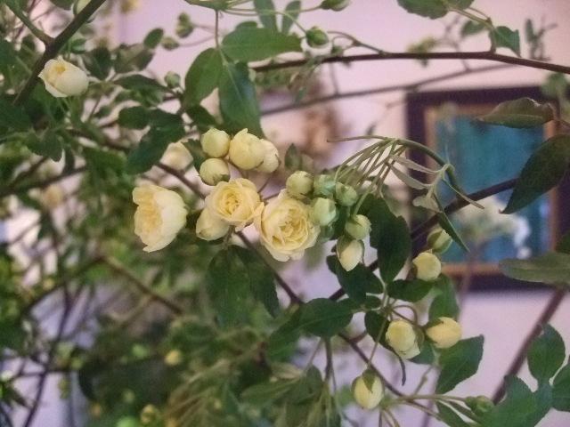 オークリーフ(香りの良いバラの花を・・・)_f0049672_1401836.jpg