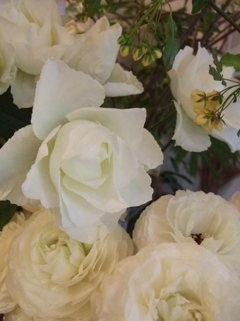 オークリーフ(香りの良いバラの花を・・・)_f0049672_1422870.jpg