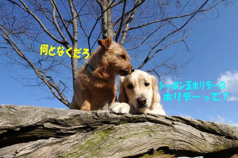 d0043478_0514978.jpg