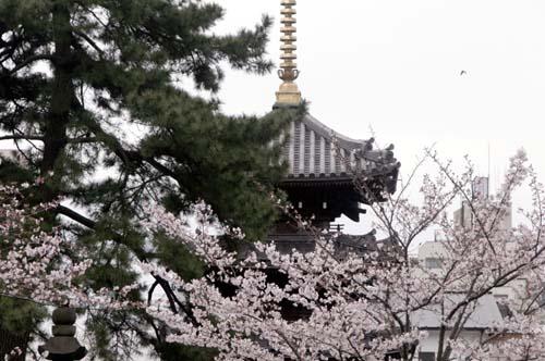 品川宿で見たこと_f0211178_18101332.jpg