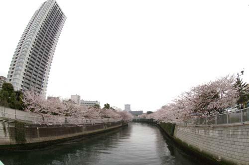 品川宿で見たこと_f0211178_18102236.jpg