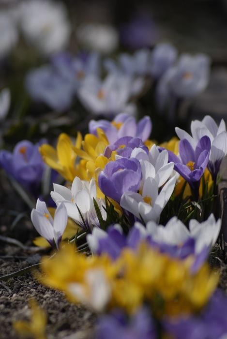 庭の花_f0126483_21282635.jpg