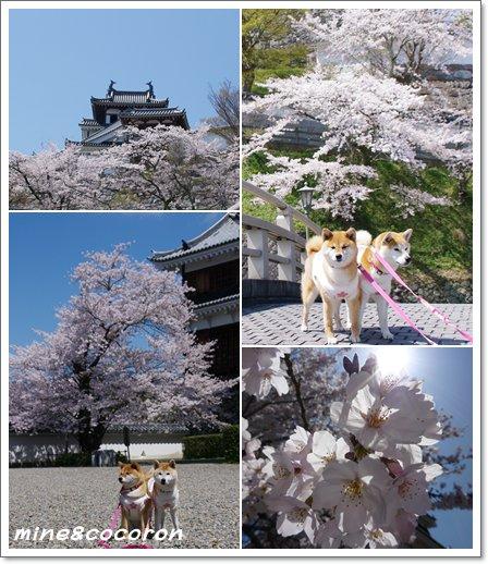 福知山城と三段池公園_a0053987_1034138.jpg