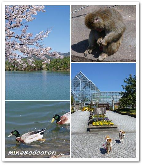 福知山城と三段池公園_a0053987_1075139.jpg