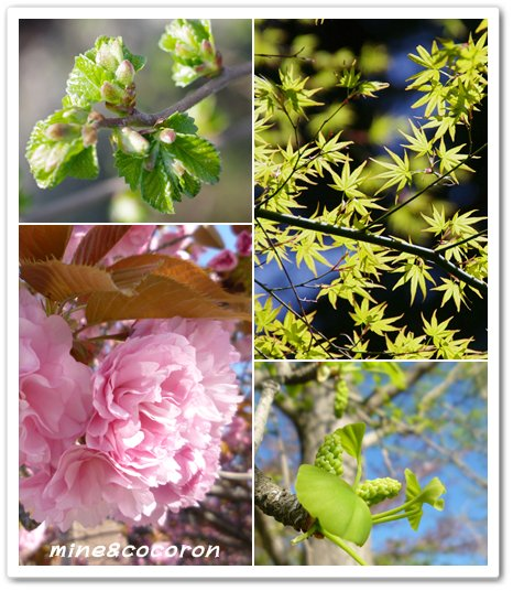 福知山城と三段池公園_a0053987_9562283.jpg