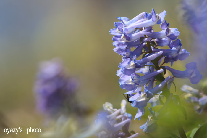 花はまだ・・・_a0071514_1943373.jpg