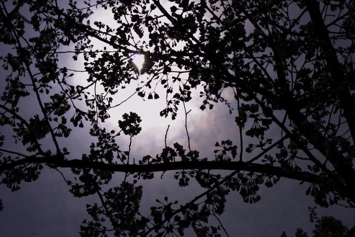 加治川の桜_e0169421_22205880.jpg