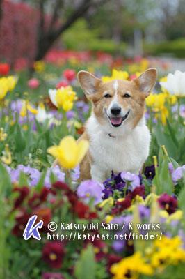 フォトテクニックデジタル5月号と、春のロケハン_d0102523_0461161.jpg