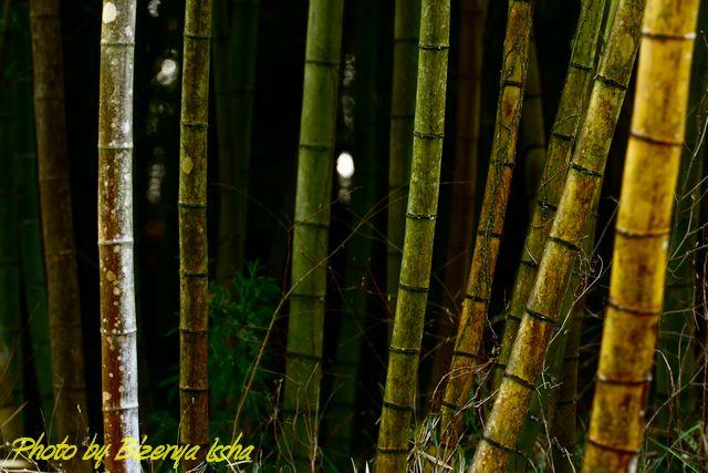 葦と竹_d0086248_7103182.jpg