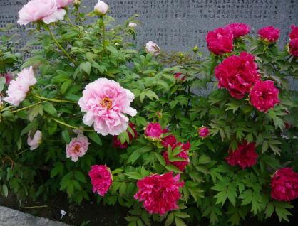 f0186753_18473250.jpg
