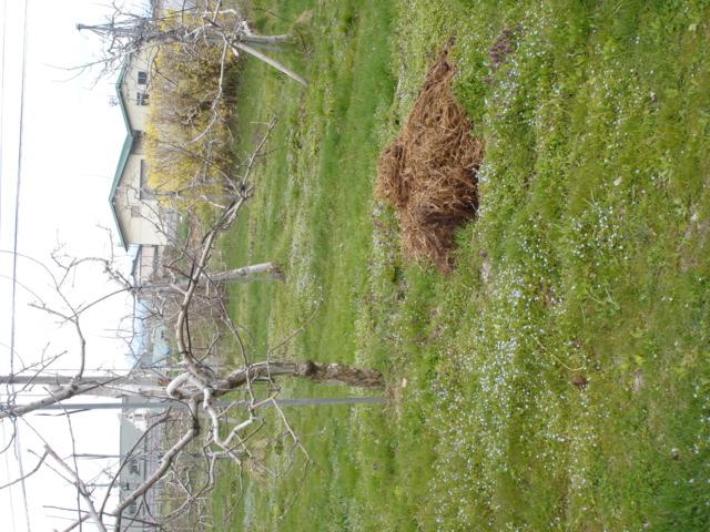 堆肥はそんなに臭くない_e0019167_18494037.jpg