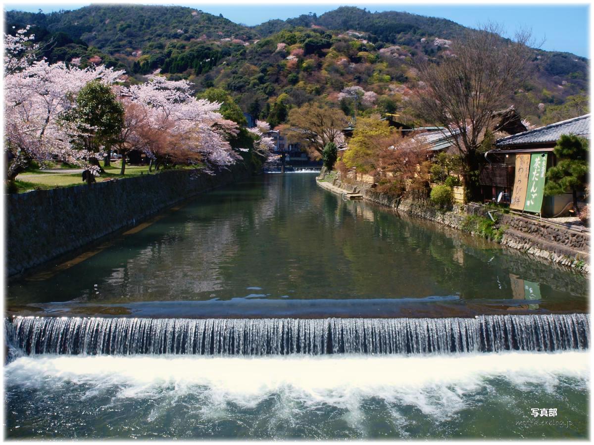 京都 嵐山 桜_f0021869_2343408.jpg