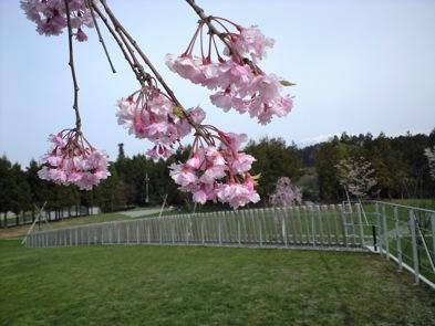 お花見-2_e0030180_19173743.jpg