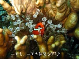 初の一人旅&体験ダイビング♪_f0144385_101478.jpg
